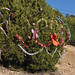 2012_Loop_360_Trees_131