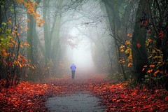 Entrance (Mah Nava) Tags: road autumn trees mist nature colors leaves fog forest germany deutschland mood nebel path herbst natur entrance human portal wald bltter bume weg farben thepath