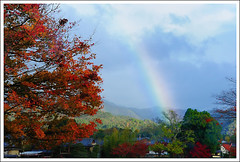 20121127_6936_ (Redhat/) Tags: autumn fall japan maple rainbow kyoto redhat