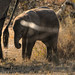"Baby Elephant in Okavango Delta, Botswana • <a style=""font-size:0.8em;"" href=""https://www.flickr.com/photos/21540187@N07/8294343710/"" target=""_blank"">View on Flickr</a>"
