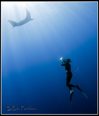 A witness to grace (bodiver) Tags: hawaii ray ambientlight freediving manta fins mantaray