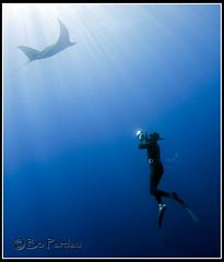 A witness to grace (bodiver) Tags: hawaii ray ambientlight freediving manta fins mantaray