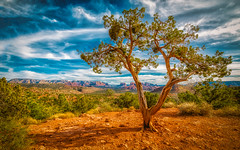 Mesa Tree