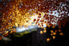 beyond the boundary (sunnywinds*) Tags: autumn japan kyoto momiji velvia   dxo