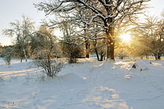 Sunny winter landscape (Explore) (Tim Lindstedt) Tags: camera wood trees winter wild sun white inspiration tree art nature beautiful beauty sunshine rock stone composition digital canon woodland season landscape outside photography photo oak bush woods scenery rocks flickr december afternoon seasons view image sweden stones scenic picture favorites reserve sunny pic compo best system foliage explore photograph scenary views frame flare imagination sverige fav 1855mm 1855 bushes winterland province comments comment 2012 favorit explored 550d timlindstedt