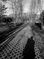 Path of Diamonds (pilechko) Tags: trees winter shadow blackandwhite pattern afternoon hamilton nj mercercounty groundsforsculture