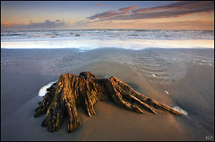Ohope Dawn (katepedley) Tags: new newzealand tree beach sunrise canon island dawn sand waves north driftwood zealand stump northisland 5d ripples 1740mm bayofplenty whakatane ohope gndfilter