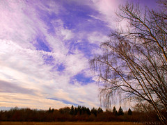 winter sky (olipennell) Tags: tree birch baum birke heilbronn waldheide