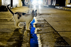 Cat in the Street (@amarulero) Tags: street blue light sky color reflection car night cat calle gato carro weekly cartagena rau1496