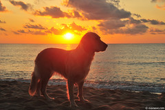 October sea (.:: Maya ::.) Tags: sea wild dog beach sunrise golden retriever bulgaria shore mayaeye mayakarkalicheva маякъркаличева