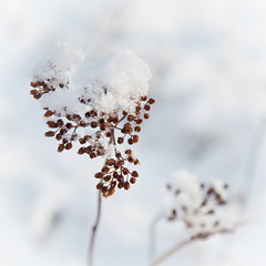 Winter romance (Kristin Sig) Tags: winter white snow cold nature soft romance