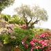 "Balade dans les jardins de l'Abbaye de Valsaintes • <a style=""font-size:0.8em;"" href=""http://www.flickr.com/photos/90528120@N02/8389188859/"" target=""_blank"">View on Flickr</a>"