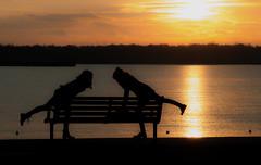 Striking a Pose (The Image Den) Tags: girls sunset silhouette geotagged nikon dancers dusk candid posing hampshire odd unusual southampton bizarre photographing goldenhour settingsun singular selfie contrajour mayflowerpark d5000 foreignchicks geo:lat=5089718966767951 geo:lon=14088916779292049