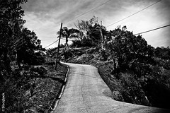 road up high (blacqbook) Tags: road trees sky blackandwhite nature landscape outdoors bush path branches pole palmtree trinidad caribbean middle telephonewires blacqbook