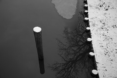 afloat (brianephotos) Tags: blackandwhite snow tree ice water reflections post shore egan