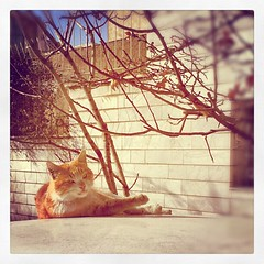 Sholex cat (Mohammad Reza Rostami) Tags: square toaster squareformat iphoneography instagramapp uploaded:by=instagram foursquare:venue=4fc65857e4b09cc8bcbefb14