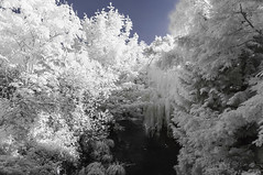 Ladywell Fields. (blackwoodse6) Tags: park uk blue white london ir outdoors nikon lewisham infrared foilage southlondon ladywell falsecolour southeastlondon londonparks 720nm nikond300