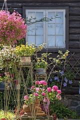 Charming Son, Norway (Ingunn Eriksen) Tags: son vestby norway flowers garden akershus