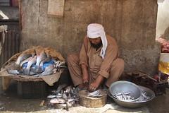 Selling fresh river fish in market (muhammadabdullah_k) Tags: charsada pakistan interest free loans microfinance entrepreneurship pakhtoon ordinary people small business akhuwat fisherman fishing fish market