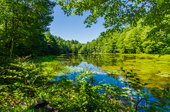 Surrounded Pond Reflections  *Explore* (Catskills Photography) Tags: summer sky trees landscape water reflections pond green blue canon1022mmlens