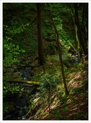 Down by the Creek (amanessinger) Tags: austria manessingercom creek carinthia rosental krnten ludmannsdorf franzendorf