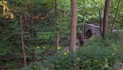 Highland Park Ravine (urbsinhorto1837) Tags: arch bridge chicagoland dawn highlandpark morning northshore ravine rosewoodpark woods suburban trail outdoor