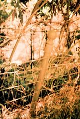 Cosina CX-1 Busch Gardens 2 () Tags: original busch gardens pasadena los angeles california history heritage theme park film tour mill waterwheel 1920s adolphus public private abandoned