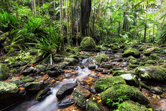 Lush (Beth Wode Photography) Tags: rainforest lush stream creek green moss mossy rocks nightcapnp nsw northernnsw beth wode bethwode protesters falls