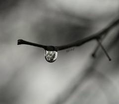 Explore the rain... (lauranistal1) Tags: rain lluvia bnw drops water blancoynegro tarragona photoart macro