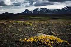 Iceland 2016 - Road F35 Kjlur (cesbai1) Tags: iceland islande islanda islandia is summer 2016 road f35 piste kjlur suurland