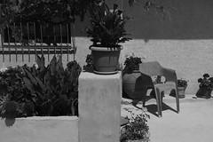 2016-07-28 09.07.08 1 (beamaestre11) Tags: blanco negro white black blackwhite blanconegro street calle cantabria plantas spain espaa plants flores nature silla chair vcsocam vcso