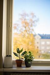 Lazy 3 (junestarrr) Tags: home window interior decor apartment fall autumn plant windowsill light oulu finland