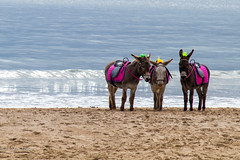 Oh I do like to be beside the seaside..... (Sue_Shaw) Tags: donkey mule triplets seaside tradition seasidedonkeys ride donkeyride beach scarborough yorkshire canon canon80d 24105 canoneos eastcoast coast coastline sand sea