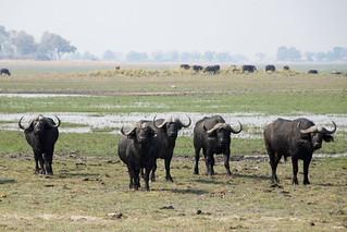Namibia Hunting Safari - Caprivi Strip 6