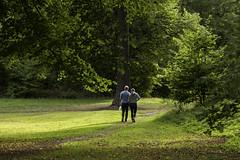 Couple (Markus Jansson) Tags: couple haga hagaparken stockholm autumn green walk trees park light together handinhand manual manualfocus legacylens legacy asahi smc takumar 55mm