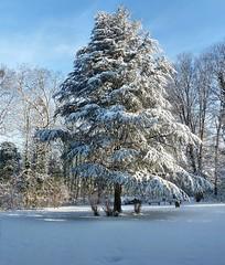 Winter (mama knipst!) Tags: schnee winter friedhof snow tree cemetery neige baum