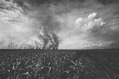 Burning (sfldp) Tags: city cane corn sugar burn crop maze crops muck sugarcane belleglade