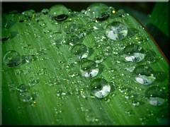 Water Drops (Ostseetroll) Tags: macro water drops wasser olympus makro tropfen e620