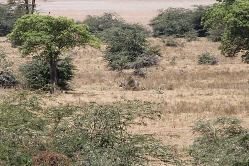 Rhino in Ngorongoro Crater (10)