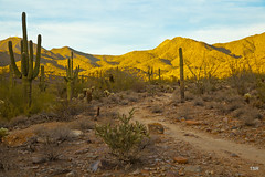 Approaching sunset (Explored 12/23) (doveoggi) Tags: sunset arizona cactus desert explore scottsdale saguaro sonorandesert 1413 mcdowellsonoranpreserve