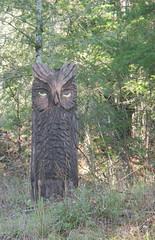 Calistoga Owl