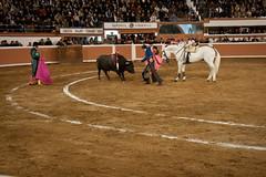 Provincia Juriquilla_2011 - 10 (Eduardo de la Garma de la Rosa) Tags: canon toros corrida lida bestia 2011 rejoneador pablohermosodemendoza eduardodelagarma mamonet