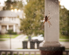 Upload #1000 (.:Chelsea Dagger:.) Tags: ohio spider web cleveland clevelandohio porch lakewood chelseadagger chelseakaliwhatever cmckeephotography chelseamckee