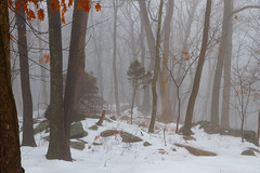 Little Tree in the Quiet Woods - in explore (SunnyDazzled) Tags: trees winter snow nature fog forest landscape woods day snowy foggy atmosphere ground quite pwwinter