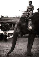 Elephant in the Palace (William J H Leonard) Tags: street city blackandwhite bw elephant man monochrome asian asia southeastasia vietnamese candid vietnam imperialpalace hue hu southeastasian northernvietnam centralvietnam candidportraiture blackwhitephotos earthasia imperialcapital