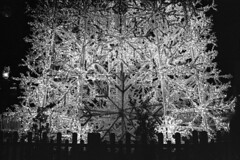Christmas Structures Unveiled (yattaran72) Tags: wood bw snow tree self 50mm lights star stand nikon kodak tmax f14 fences bn plastic usual dev leds piazza f80 nikkor rodinal developed salerno christamas insolito portanova r09 4003200 fomafix