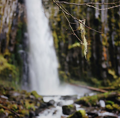dry creek falls: postapalooza #6 (manyfires) Tags: film water oregon analog mediumformat square landscape waterfall moss bokeh hasselblad pacificnorthwest gorge lichen pnw columbiarivergorge hasselblad500cm drycreekfalls