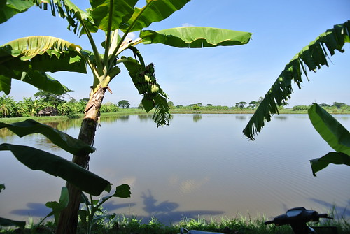 Aquaculture pond in Department of Fisheries (DoF) Station in Pantanaw township, Myanmar. Photo by Ranjitha Puskur, 2012.