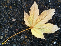 Leaf on Asphalt (Futzliputzli) Tags: street fall apple leaf strasse herbst asphalt blatt 3gs iphone autun