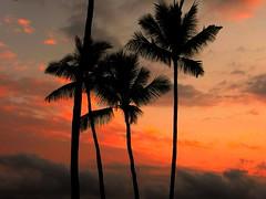 Kailua Sunset (takenbygabi) Tags: travel sunset summer vacation sky orange tree nature night sunrise hawaii polynesia afternoon pacific palm palmtree tropical poly kona thebigisland kailua kohala polynesian kailuakona